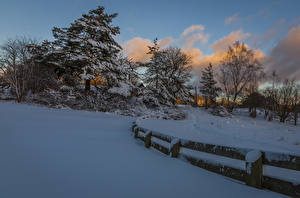 Images Winter Snow Spruce Fence Trees Nature