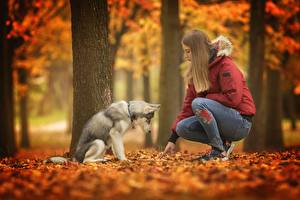 Hintergrundbilder Herbst Hunde Siberian Husky Mädchens