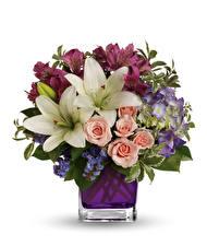 Bilder Sträuße Rose Lilien Alstroemeria Weißer hintergrund Vase Blüte