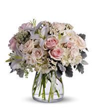Bilder Blumensträuße Rose Lilien Hortensien Weißer hintergrund Vase Blumen
