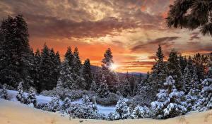 Bilder Kanada Park Wälder Winter Sonnenaufgänge und Sonnenuntergänge Himmel Yosemite Fichten Schnee Natur
