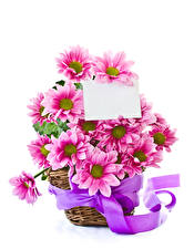 Pictures Chrysanthemums White background Template greeting card Wicker basket Ribbon Pink color Flowers