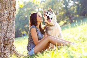 壁纸,,犬,棕色的女人,微笑,西伯利亞雪橇犬,坐,舌,女孩,