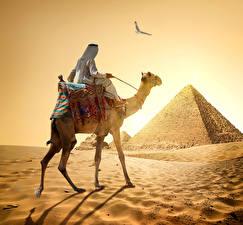 Hintergrundbilder Ägypten Wüste Altweltkamele Mann Pyramide bauwerk Sand Cairo Natur Tiere