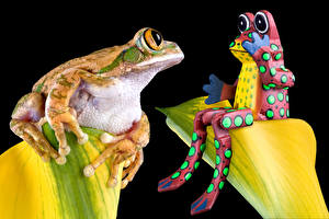 Pictures Frogs Black background Two Animals