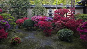 デスクトップの壁紙、、日本、京都市、公園、ツツジ、低木、自然