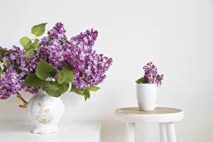 Fonds d'écran Syringa Fond blanc Vase Cercles Fleurs