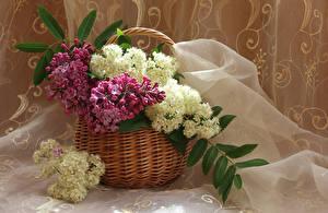 Bilder Flieder Weidenkorb Ast Blumen