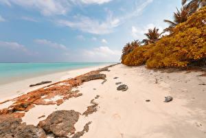 Fotos Malediven Tropen Küste Herbst Steine Strauch Strand Thoddoo Natur