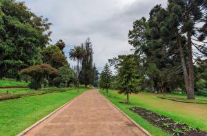 Fotos Sri Lanka Park Rasen Bäume Queen Victoria Park Natur