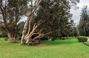 Hintergrundbilder Sri Lanka Tropen Parks Bäume Rasen Bank (Möbel) Nuwara Eliya Queen Victoria Park Natur