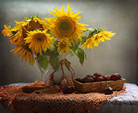 Picture Still-life Sunflowers Plums Vase Table Flowers