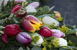 Photo Tulip Closeup Drops Ice Flowers