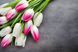 Fondos de escritorio Tulipanes De cerca Fondo gris Flores