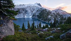 Fotos Vereinigte Staaten Park Gebirge See Steine Gras Fichten Mount Rainier National Park Cyclone Lake Natur