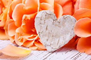 Pictures Valentine's Day Rose Orange Heart Petals Flowers