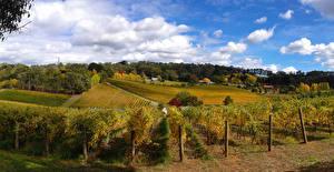 Bilder Australien Acker Himmel Rebberg Strauch Wolke Ashton Valley Adelaide Hills Natur