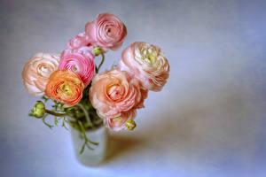 Fondos de escritorio Ramos Ranunculus Fondo gris Rosa color flor