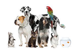 Hintergrundbilder Hunde Hauskatze Fische Papageien Weißer hintergrund Bulldogge Spaniel