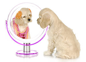 Wallpapers Dogs Jewelry White background Spaniel Mirror Puppies animal
