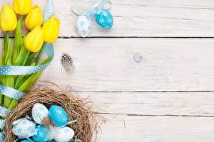 Bilder Ostern Tulpen Ei Nest Bretter Blumen