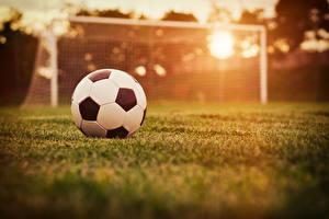 Bilder Fußball Ball Rasen sportliches