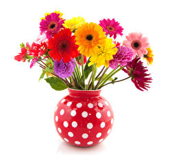 Fotos Gerbera Georginen Weißer hintergrund Vase Blumen