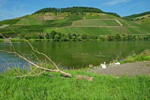 Fotos Deutschland Fluss Acker Hügel Gras Moselle Natur