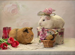 Images Guinea pigs Tulip 2 Wicker basket Branches Animals