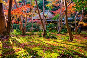 デスクトップの壁紙、、日本、京都市、秋、公園、木、自然