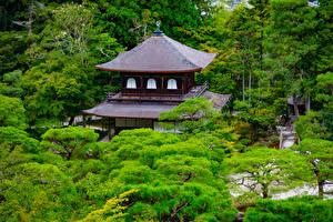 デスクトップの壁紙、、日本、京都市、公園、寺院、木、自然
