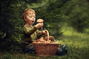 Bilder Pilze Junge Weidenkorb Staunen kind