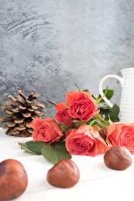 Hintergrundbilder Rosen Kastanien Rosa Farbe Zapfen Blumen