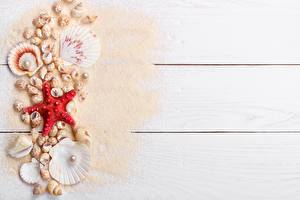 Hintergrundbilder Muscheln Seesterne Perlen Sand Bretter