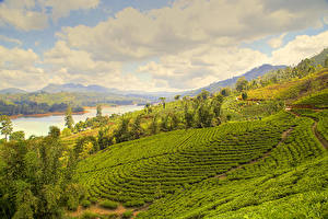 Bilder Sri Lanka Landschaftsfotografie Felder Flusse Nuwara Eliya Natur