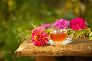 Hintergrundbilder Tee Zinnien Tasse das Essen