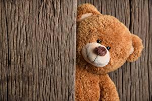 Hintergrundbilder Teddy
