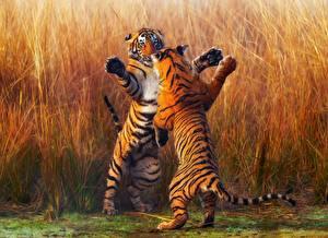 Bilder Tiger Zwei Schlägerei Tiere