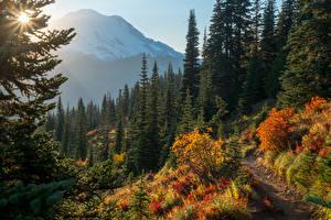 Fotos Vereinigte Staaten Park Herbst Gebirge Fichten Mount Rainier National Park Natur