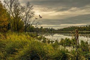 Hintergrundbilder Vereinigte Staaten Flusse Vögel Himmel Gras Chisago Minnesota Natur
