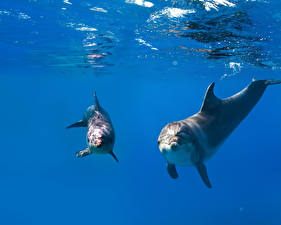 Pictures Underwater world Dolphins 2 animal