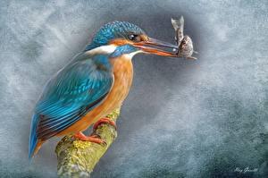 Fotos Vögel Eisvogel Fische - Lebensmittel Malerei Gezeichnet Schnabel