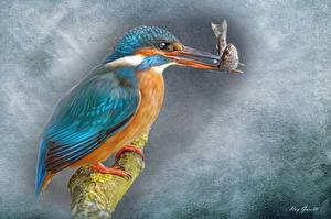 Pictures Birds Common Kingfisher Fish - Food Pictorial art Painting Art Beak Animals
