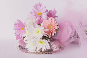Wallpapers Bouquets Chrysanthemums Colored background Flowers