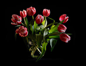 Pictures Bouquets Tulip Black background Red flower