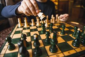 Bilder Schach Großansicht Hand