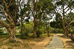 Fotos China Park Bäume Weg Macao Natur