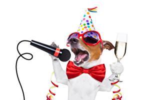 Tapety na pulpit Pies domowy Święta Motyle Mikrofon Jack Russell Terrier Okulary Kieliszek Zabawne Na białym tle zwierzę