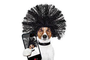 Pictures Dog White background Jack Russell terrier Funny Hair Smartphones Selfie Haircut Animals
