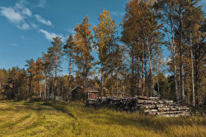 Pictures Finland Lapland region Autumn Grass Trees Wood log Ivalo Nature